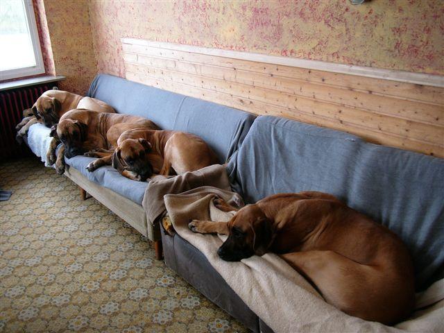 004-Hundezimmer