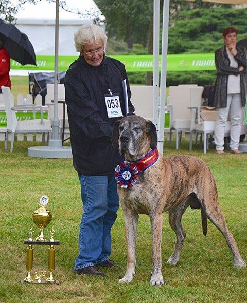 Ofarim von Rocas Melody- Clubsieger 2016 - Bester Veteran