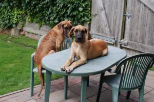 Peri und Pina bei Tisch