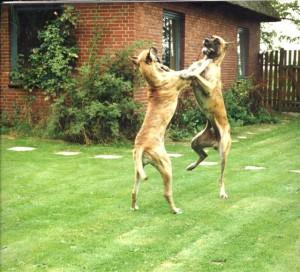 Dornröschen und Danilo tanzen