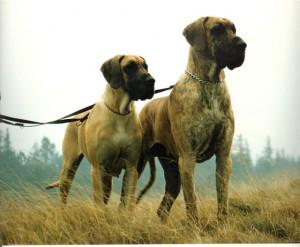Einzi und Engelbert